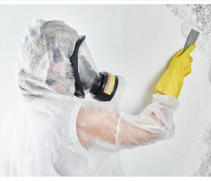 A professional disinfector in overalls processes the walls from mold with a spatula.